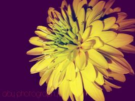 yelow flower by aby192