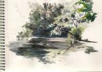 River bank by alcotton