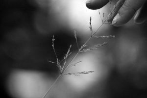 Touch Of Life by Lauren-K