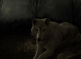Dark Wolf by JohwMatos