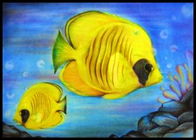 Tropical Fish in colour pencil by a6-k