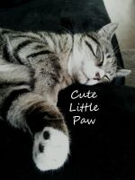 cute little paw by Lindahier