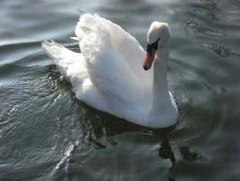 Brooklands Swan by betterwatchit
