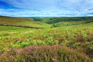 the exmoor valley by sassaputzin