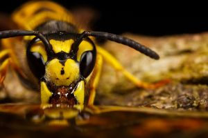 Wasp Reflection I by dalantech