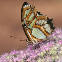 My Butterfly by Betuwefotograaf