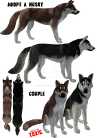 HUSKies ADOPTED by ToXiC-Red-Wolf