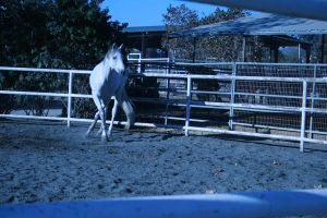 gray horse stock 20 by xbr0kendevotion