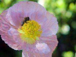 close up flower and bee by ayukat