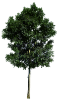 Tree 48 png by gd08