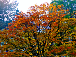 Autumn at The Botanic Gardens -19- by IoannisCleary