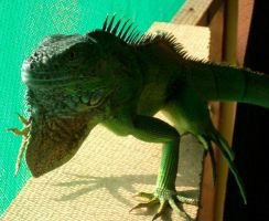 Pista The Lizard by Cab-GdL