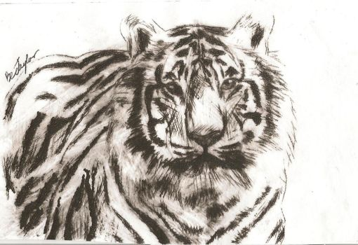 Tiger dry point etching by bec-waz-ere27