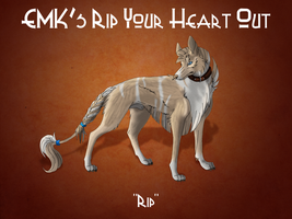 Ch. EMK's Rip Your Heart Out by EhwazMaddoxKennels