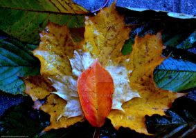 Autumn Leaves 1 by PhilipWebb