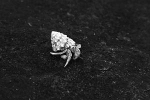 Hermit Crab by lordmaky01