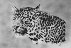 Amur Leopard by salt25