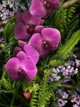 Orchids and ferns and more by kparks