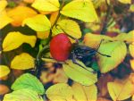 warm colors of autumn by rockmylife