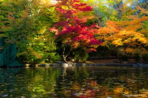 1283 Colorful Fall Pond by ainsliehubert