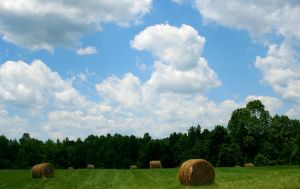 Bales on a sunny day wall by lowjacker