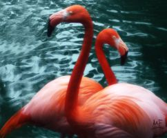 Mr. and Mrs. Pink Feathers by Finchley