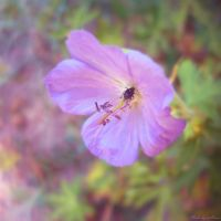 Gentle violet by wAnnw