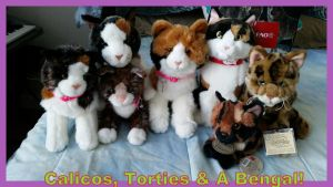 Calicos, Torties, and Bengal Collection! by Vesperwolfy87