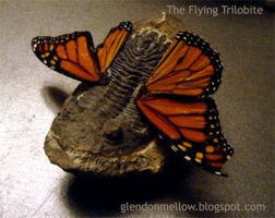 Flying Trilobite photo by GlendonMellow