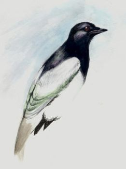 Magpie by isbelle