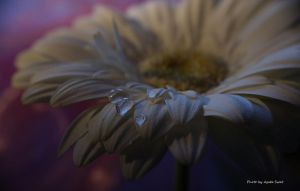 Flower and drops... by AgataSwat
