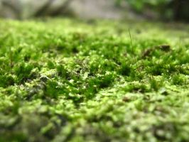 moss1 by januscastrence