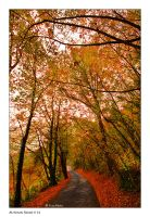 Autumn Road_14 by Marcello-Paoli