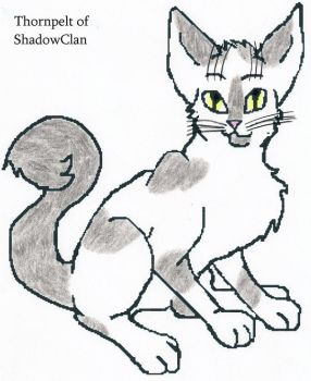 Thornpelt of Shadowclan by Seri-goyle