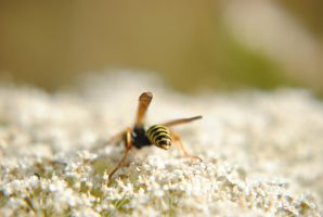 Wasp? Yellow Jacket? by ObsessiveGoblin