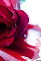 Bloody rose by EmilieBouvier