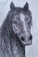 charcoal horse by s-qweek