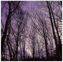 Purple trees by photocore