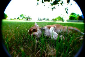 Innocence in the grass by CityWavePhotography