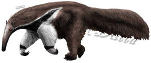 Giant anteater study by amorousdino