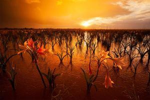 Namibian Eden by hougaard