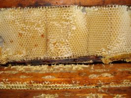 2014 Honey Harvest: Close up by JWA2277