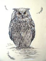Owl 01 by XThrill
