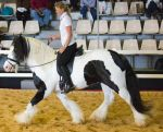 STOCK - 2014 Total Equine Expo-84 by fillyrox