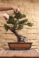 Bonsai by zero--one