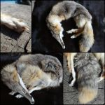 LS Kit Fox for Sale by aquiafin