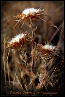 Thistle Down by kayaksailor