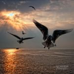 Seagulls - by nurtanrioven
