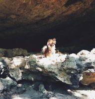The Lair of the Diva Squirrel by Brillyent-Blondie