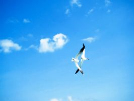 Soaring in the Blue Summer Sky by samnouvelle